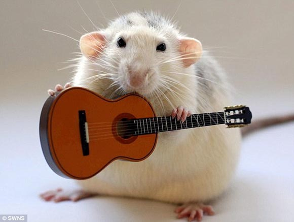 老鼠的聚會